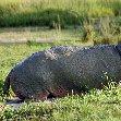 Uganda Safari Murchison Falls NP Lolim Pictures