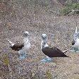 Travel Experience Galapagos Ecuador Adventure