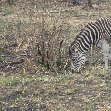 Hluhluwe Game Reserve Bayala South Africa Album Photographs