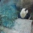 Day Trip to the Zoo in Beijing China Album Sharing