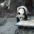 Day Trip to the Zoo in Beijing China Photo Gallery