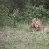 Kenya Tours and Safaris Tsavo Travel Sharing Kenya Tours and Safaris