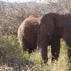 Kenya Tours and Safaris Tsavo Review
