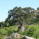 Habarana Sri Lanka Trip Pictures