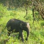 Habarana Sri Lanka Diary Information