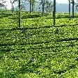 Nuwara Eliya Sri Lanka Stay Travel Experience