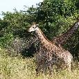Drifters Kruger Park Safari South Africa Johannesburg Review Photograph