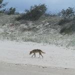 Fraser Island Tour Australia Diary Adventure
