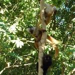 Holiday in Madagascar Ankarana Travel Package
