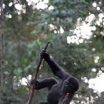 Omboue Gabon Travel