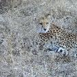 Kruger National Park South Africa Vacation Experience
