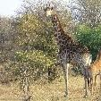 Kruger National Park South Africa Review Picture