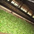 Tea Factory Visit Sri Lanka Dambulla Trip Review