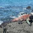 Galapagos Islands Ecuador Holiday Review