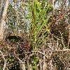 Photos of the Sundarbans National Park, Bangladesh Bangladesh Asia