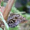 Photos of the butterflies in Philipsburg, Netherland Antilles Netherlands Antilles
