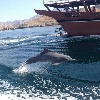 Dhow cruise with dolphin watch Khasab Oman